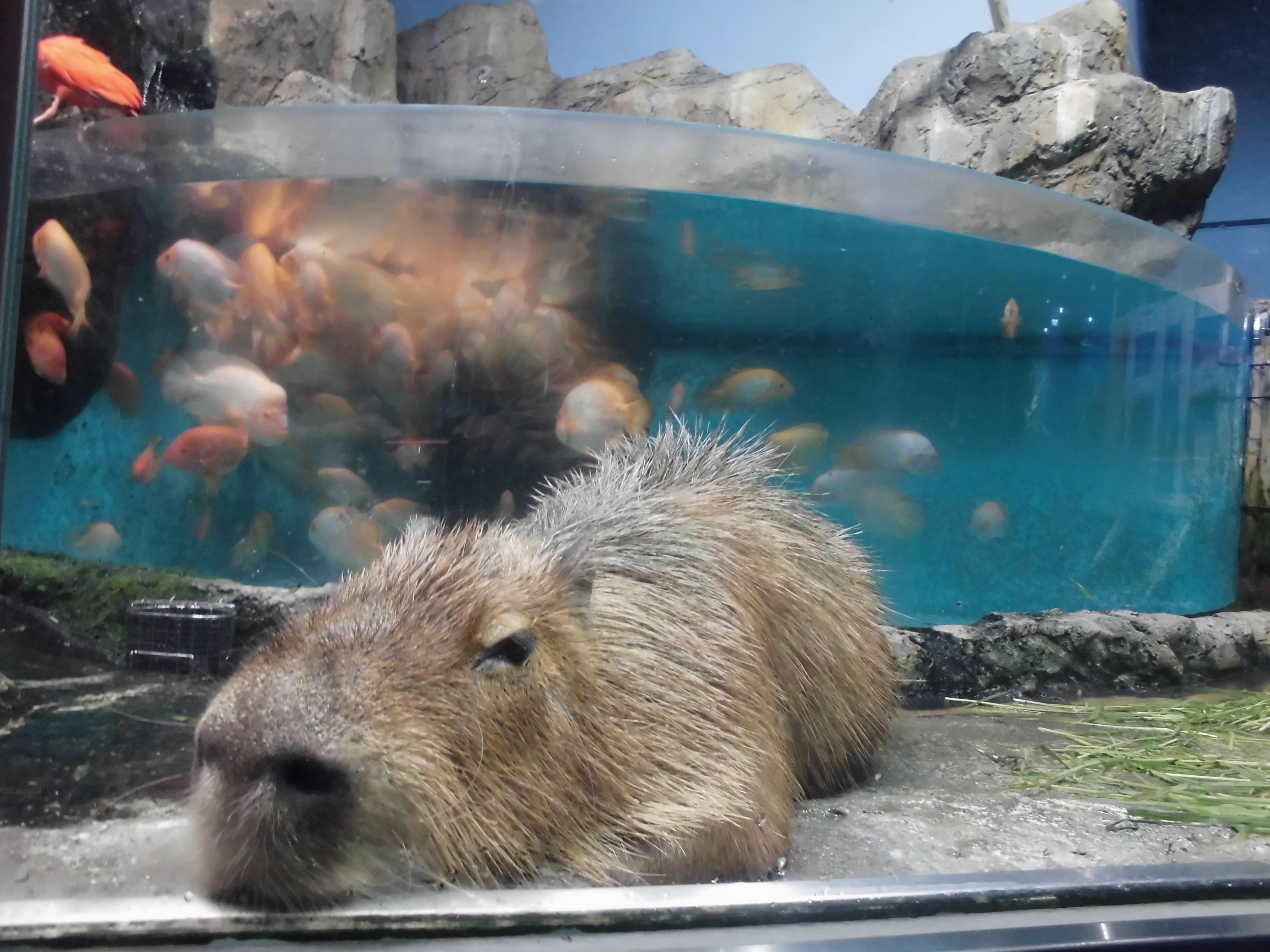 ジュゴンに会える水族館に行こう!!【鳥羽水族館に行ってきました。by-VEGETAPSY】